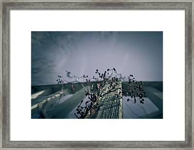 Cling To You Framed Print by Shane Holsclaw
