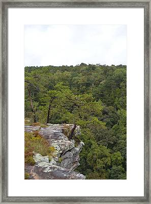 Clinging To Life Framed Print by James Potts