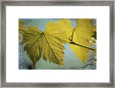 Clinging To The Vine Framed Print by Fraida Gutovich