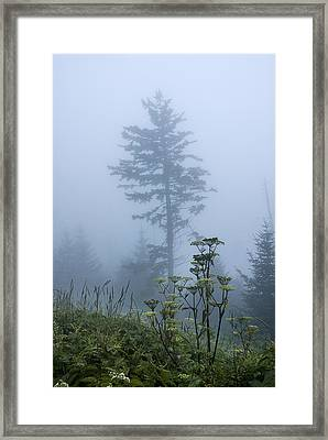 Clingman's Fog II Framed Print
