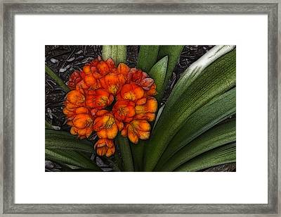 Clivia Framed Print by Photographic Art by Russel Ray Photos