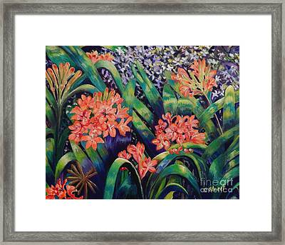 Clivias In Bloom Framed Print by Caroline Street
