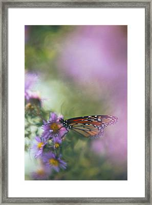 Cloak Of Colors Framed Print by Bruce Thompson