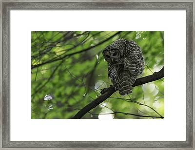 Cloaked In Silence Framed Print by Everet Regal