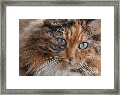 Cloe Kitty Framed Print