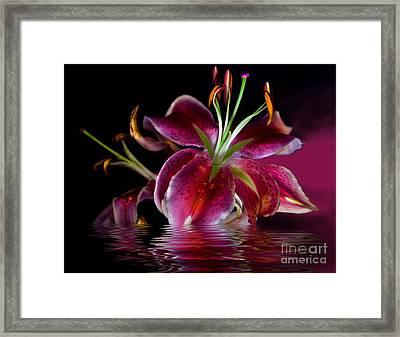 Clorella Framed Print