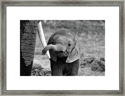 Close Framed Print by Bjoern Alicke