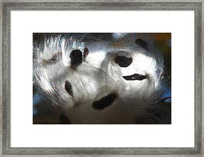 Framed Print featuring the photograph Close Cotton by Alicia Knust