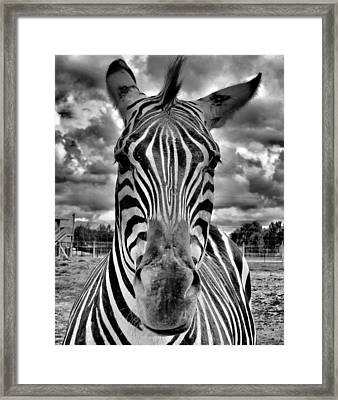 Close Encounter Framed Print by Dan Sproul