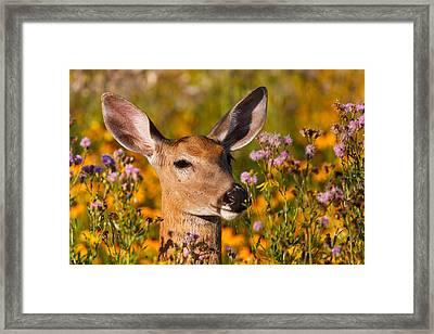 Close Encounter  Framed Print