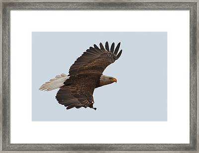 Close Encounter Of The Best Kind Framed Print