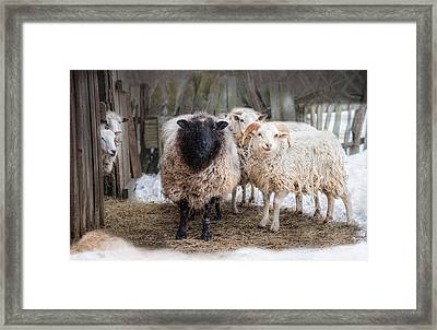 Close Knit Framed Print by Robin-Lee Vieira