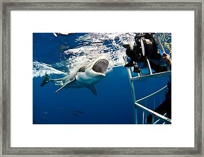 Close One Framed Print by David Valencia