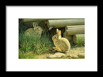 Cottontail Framed Prints