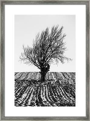 Close Tree In Snow Framed Print by John Farnan