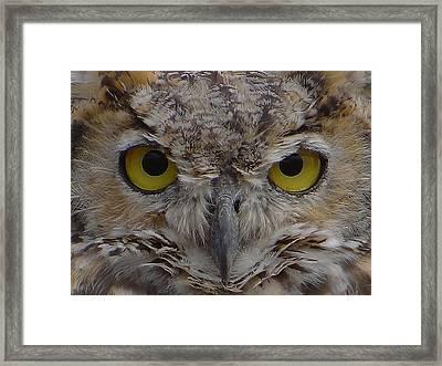 Close-up Framed Print by Blair Wainman