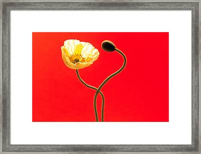 Close Up Cream Poppy And Seed Pod Framed Print