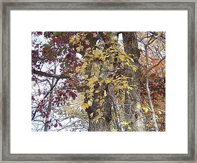 Close Up Fall Tree  Framed Print by Angelia Hodges Clay