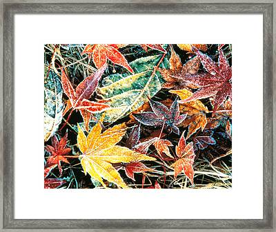 Close Up Fallen Maple Leaves Framed Print by Panoramic Images