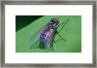 Close Up Fly Framed Print