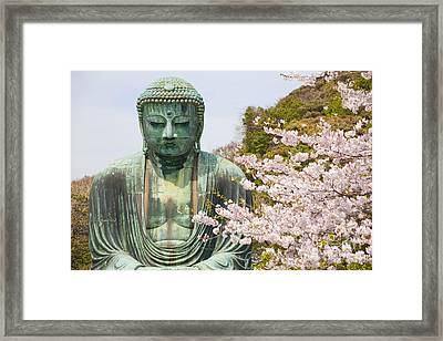 Close Up Great Buddha With Sakura Foreground In Kotoku-in Temple Framed Print by Panithan Fakseemuang