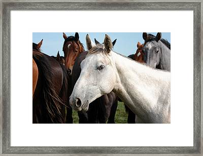 Close-up Herd Of Horses. Framed Print by Jan Brons