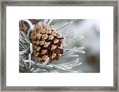 Close-up Image Of Frost-covered Pine Framed Print by Charles Tribbey