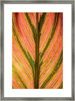 Close Up Of A Colourful Leaf Framed Print by Scott Mead