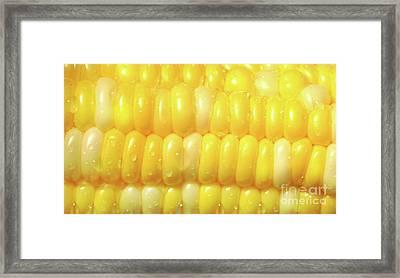 Close-up Of A Corn Framed Print by Sandra Cunningham