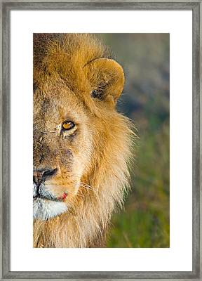 Close-up Of A Lion, Ngorongoro Framed Print by Panoramic Images