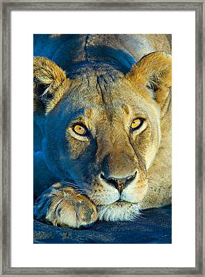 Close-up Of A Lioness, Ngorongoro Framed Print by Panoramic Images