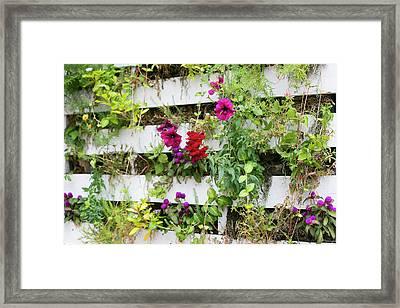 Close Up Of A Living Wall Framed Print by Julien Mcroberts