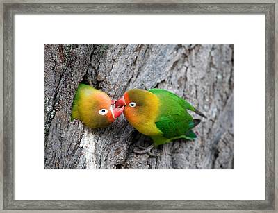 Close-up Of A Pair Of Lovebirds, Ndutu Framed Print by Panoramic Images
