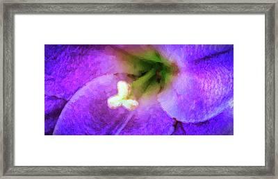 Close-up Of A Purple Flower, Oregon, Usa Framed Print