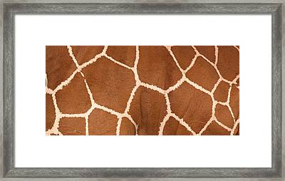 Close-up Of A Reticulated Giraffe Framed Print by Panoramic Images
