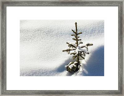 Close Up Of A Small Snow Covered Framed Print by Michael Interisano