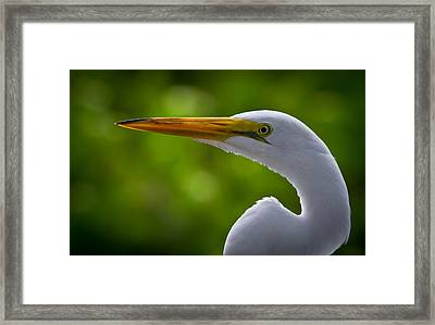 Close Up Of A Snowy Egret Framed Print by Andres Leon