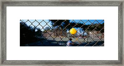 Close-up Of A Tennis Ball Stuck Framed Print by Panoramic Images