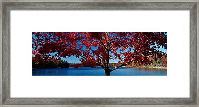 Close-up Of A Tree, Walden Pond Framed Print by Panoramic Images