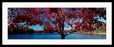 Walden Pond Photographs Framed Prints