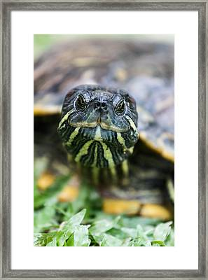 Close-up Of A Turtle Framed Print