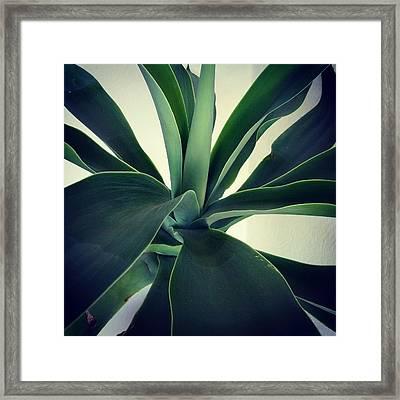Close-up Of Agave Plant Framed Print by Antonio Trogu / Eyeem