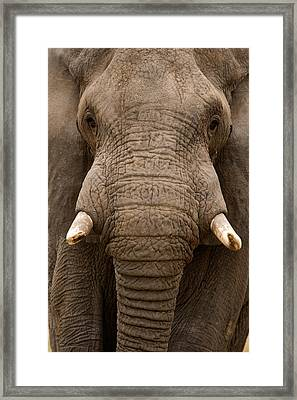 Close-up Of An African Elephant Framed Print by Panoramic Images