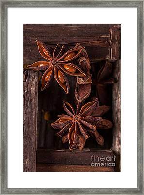 Close-up Of Anise Framed Print by Natasha Breen