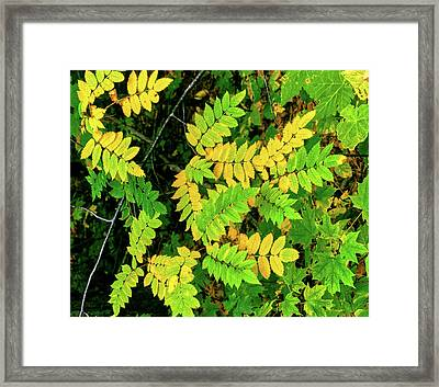 Close-up Of Autumn Leaves, Keweenaw Framed Print