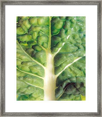 Close Up Of Bumpy Vegetable Leaf Framed Print by Panoramic Images