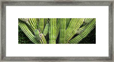 Close-up Of Cactus Plant, Cabo Pulmo Framed Print by Panoramic Images