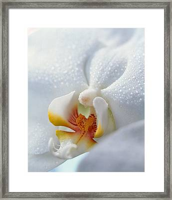 Close Up Of Center Of White Orchid Framed Print by Panoramic Images