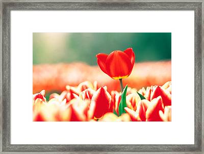 Close Up Of Flower Head Rising From Framed Print by Panoramic Images
