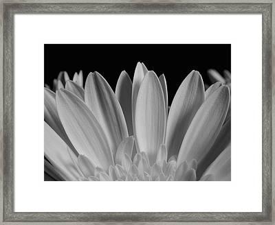 Close Up Of Flower Petals  Waterloo Framed Print